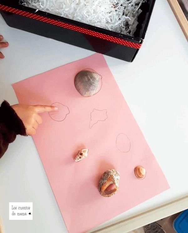 que hacer con conchas
